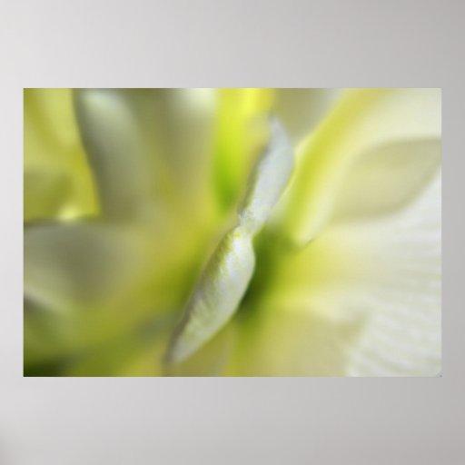 Flor translúcida de la primavera impresiones