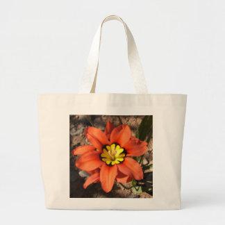 Flor tricolora del Sparaxis Bolsas