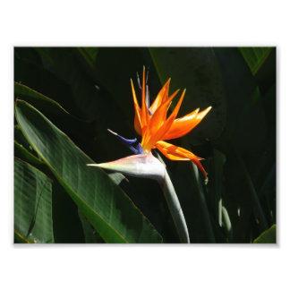 Flor tropical anaranjada de la ave del paraíso fotografías