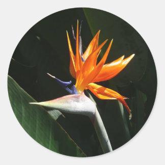 Flor tropical anaranjada de la ave del paraíso pegatina redonda