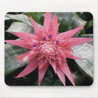 Flor tropical de Bromeliad Tapete De Ratones