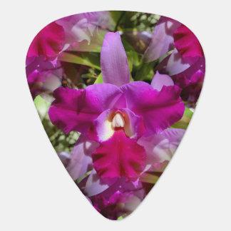 Flor tropical de la orquídea de Cattleya Plectro