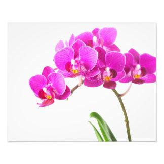 Flor tropical de la orquídea púrpura rosada del cojinete