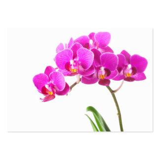 Flor tropical de la orquídea púrpura rosada del tarjetas de visita grandes