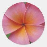 Flor tropical del Frangipani rosado hawaiano del Pegatinas Redondas