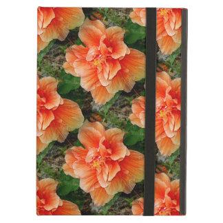 Flor tropical del hibisco del albaricoque