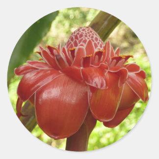 Flor tropical del jengibre rojo de la antorcha pegatina redonda