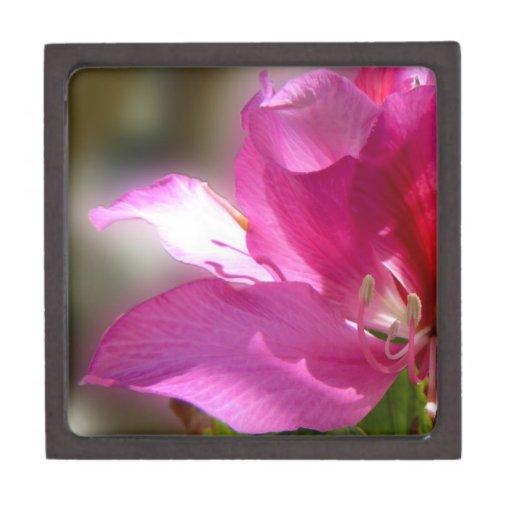 Flor tropical rosada asombrosa del árbol cajas de regalo de calidad