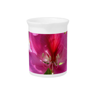 Flor tropical rosada asombrosa del árbol jarra de beber