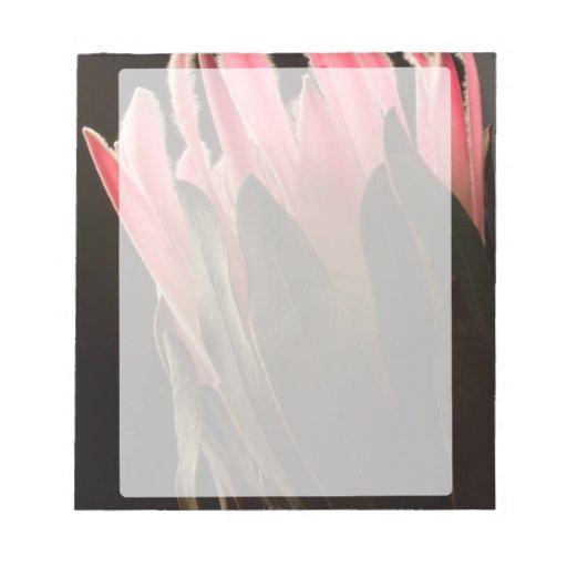 Flor tropical rosada intrépida del Protea Blocs