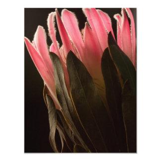 """Flor tropical rosada intrépida del Protea Invitación 4.25"""" X 5.5"""""""