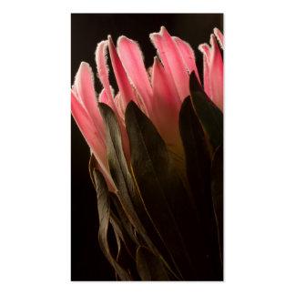 Flor tropical rosada intrépida del Protea Tarjetas De Visita