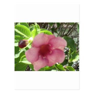 Flor tropical rosada postal