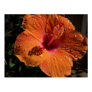 Flor tropical postales