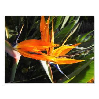 Flor única fotografía