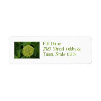 Flor verde floreciente del Zinnia Etiquetas De Remite