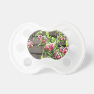 Flor verde marrón del jardín del lirio chupete de bebé