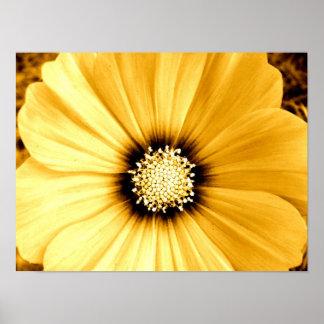 Flor vieja del amarillo del encanto póster