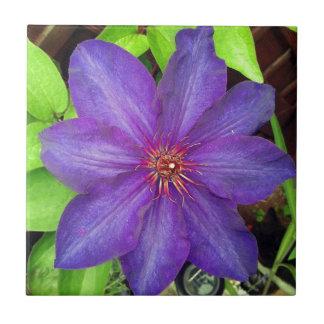 Flor violeta del Clematis Azulejos Ceramicos