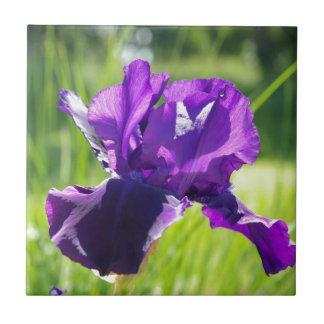 Flor violeta del iris azulejo cerámica