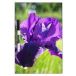 Flor violeta del iris pizarra