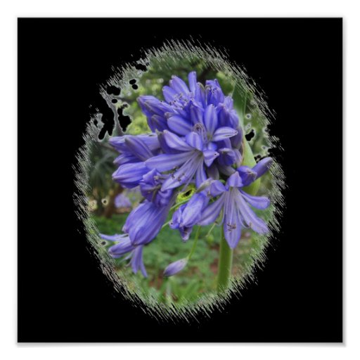 Flor violeta póster