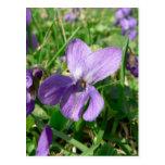 Flor violeta tarjeta postal