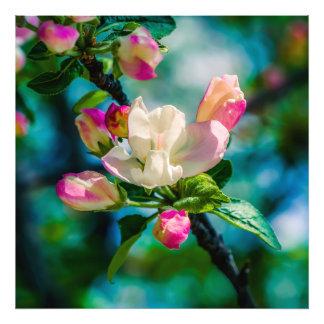 Flor y brotes de Crabapple Fotografía