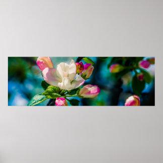 Flor y brotes de Crabapple Póster