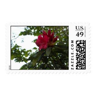 Flor y brotes rojos del rododendro sello