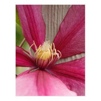 Flor y estambre postal