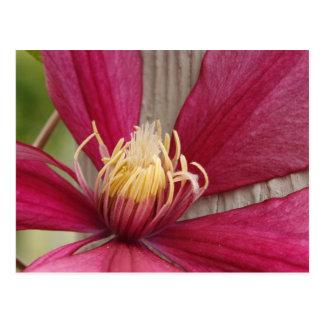 Flor y estambre postales