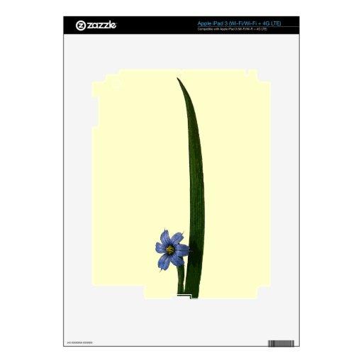 Flor y hoja de la hierba de ojos azules iPad 3 pegatina skin