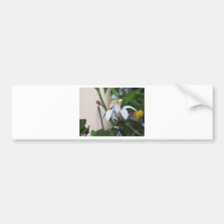 Flor y hojas del árbol de limón pegatina para auto