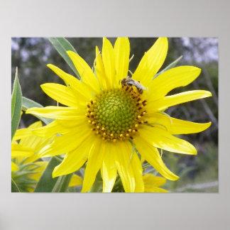Flor y la abeja póster