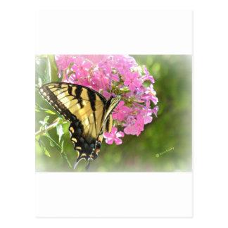 Flor y mariposa rosadas tarjetas postales