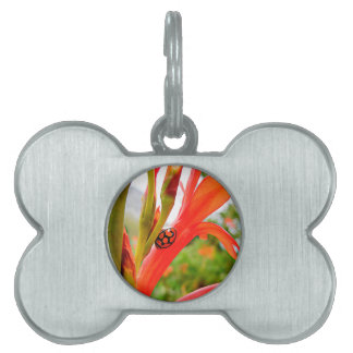Flor y mariquita rojas de la placa de placa de nombre de mascota