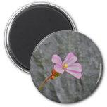 Flor y piedra imanes de nevera