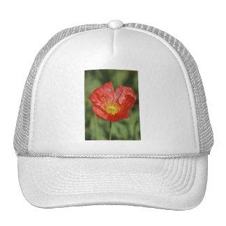 Flor y significado de la amapola gorras