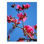 Flor y significado de la azalea postales