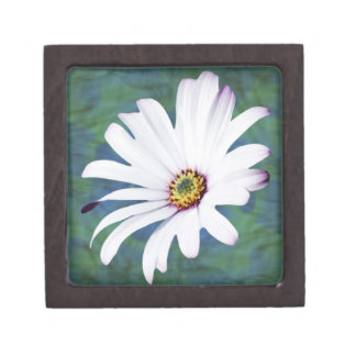Flor y significado de la margarita cajas de regalo de calidad