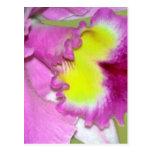 Flor y significado de la orquídea postal