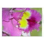 Flor y significado de la orquídea tarjeta de felicitación