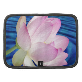 Flor y significado de Lotus delicada Planificadores