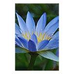 Flor y significado de Lotus Papelería Personalizada