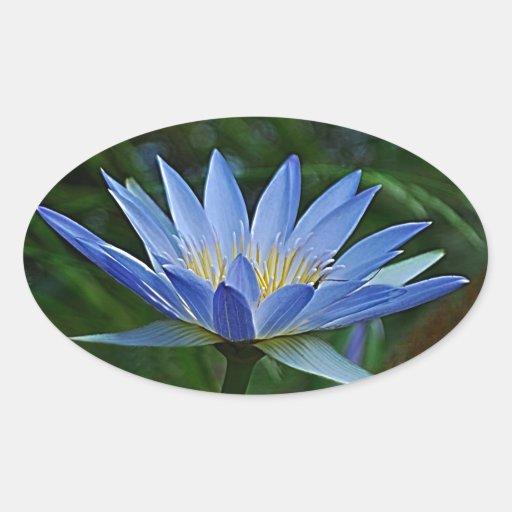 Flor y significado de Lotus Pegatina De Óval Personalizadas