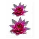 Flor y significado de Lotus Postal