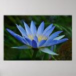 Flor y significado de Lotus Poster