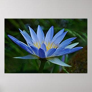 Flor y significado de Lotus Póster