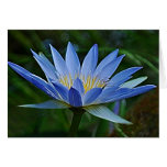 Flor y significado de Lotus Tarjeta De Felicitación